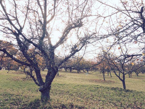 Nature Autumn Trees
