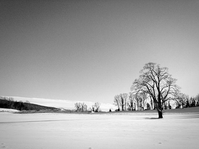 Bare Tree In Snowy Field