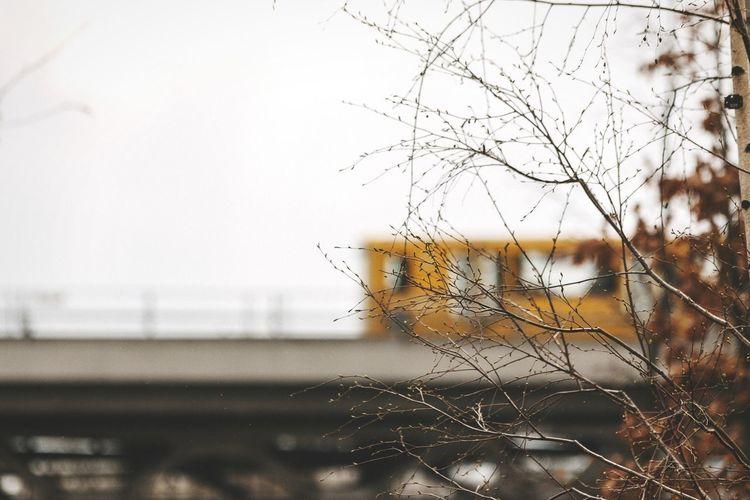 Tentacles Open Edit Subway Train EyeEm Best Shots - Landscape Urban Landscape 70-200mm Trees Tentacles Getting Inspired My Fuckin Berlin