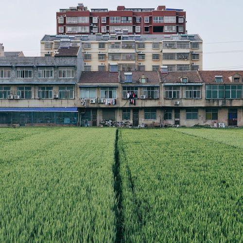 City Grass Sky