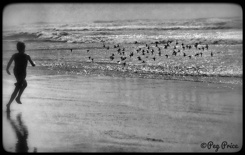 Racing the Birds. Oregon Coast Hello World Takingphotos Check This Out Oregon Beachphotography Beach Blackandwhite Photography Blackandwhite Black & White Beauty In Nature Visual Trends SS16 - The Rise of Nature People Photography People Of The Oceans Child Running On Beach Birds In Flight