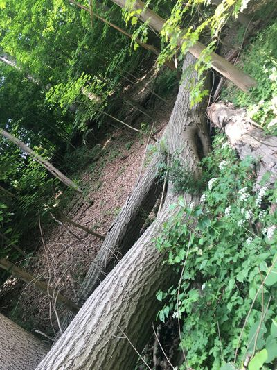 Tree Log Chopped Tree Fallen Tree Plant Growth Green Color No People Day Nature Tree Tranquility Outdoors Beauty In Nature Close-up Forest
