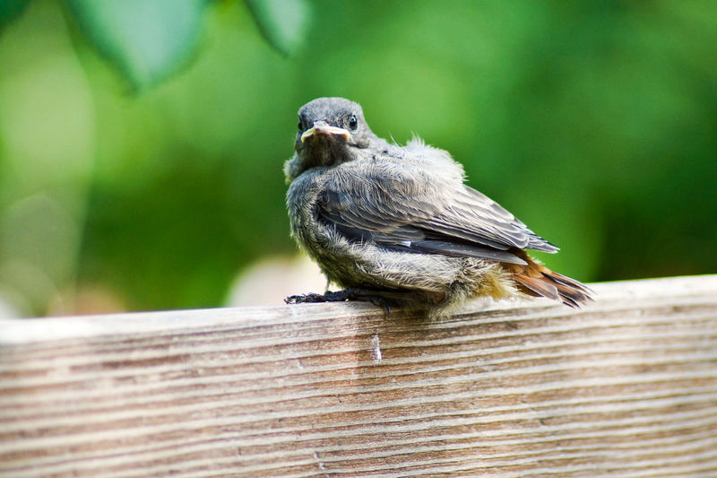 Portrait of bird perching on wooden roof