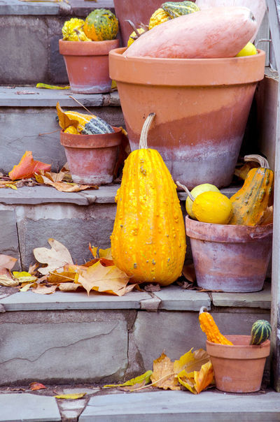 terra cotta pots hold gourds and pumpkins to create a beautiful fall display in the garden Autumn Fall Beauty Fall Colors Halloween Michigan Pumpkins Rustic Stone Steps Thanksgiving USA Vegetables & Fruits Wood Boxes Day Decorations Decorative Food Freshness Gourds Orange Color Seasonal Terra Cotta Pots