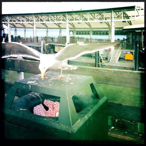 Wingspan Enjoying The Sights Sea Gull Hipstamatic
