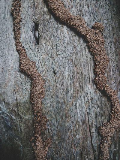 ปลวกกัดกินไม้แต่ไม่กัดกินใจ