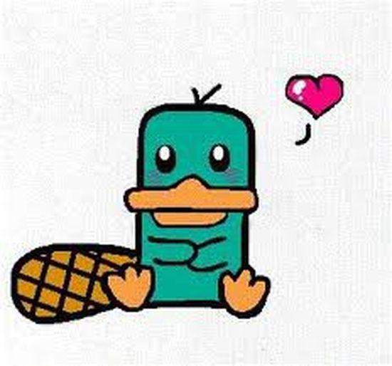 Perry <3 Ornitorrinco