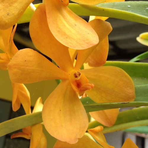 Yellow Orchids Yellow Flower Yellow Color Bright Colors Nature Outdoors Close-up Beauty In Nature Freshness Beautiful Day