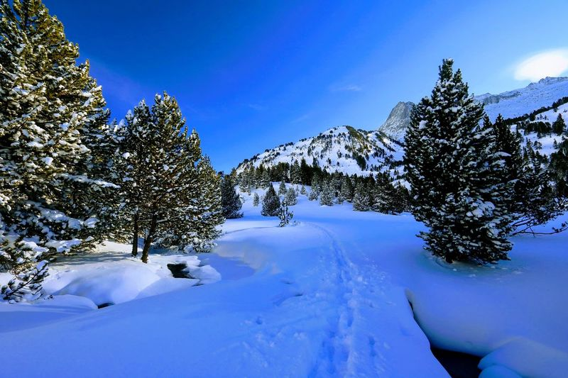 Frozen trees on snowcapped mountain against blue sky