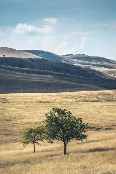 Lonely trees and grassland Landscape Environment Scenics - Nature Plant Beauty In Nature Sky Tree Nature No People Field Grass Outdoors Semi-arid Hills Grassland Day Non-urban Scene Mountain Range Arid Climate