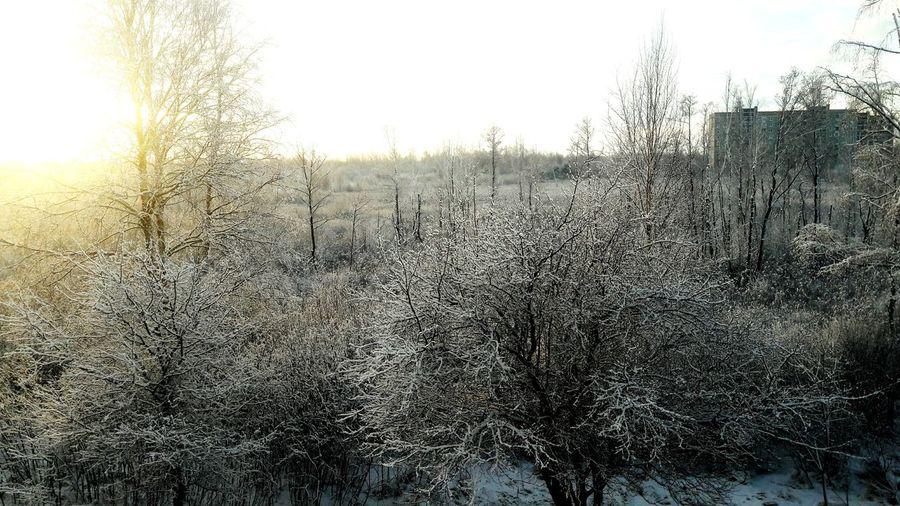 Snow Sun Morning