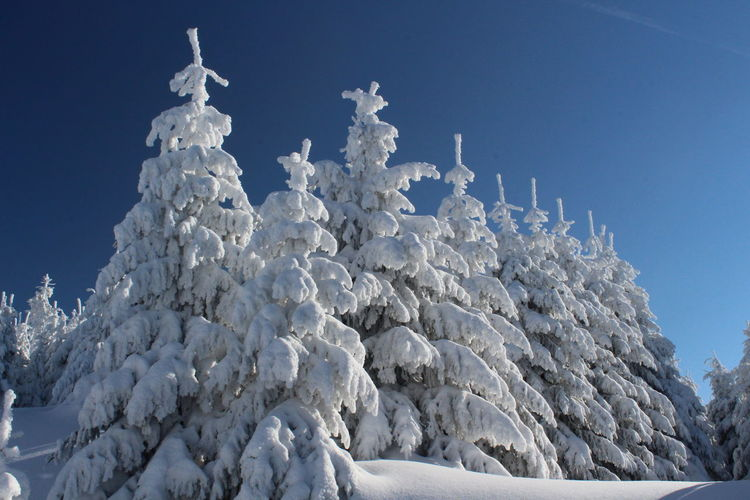 winter impressions of Nationalpark Harz Cold Temperature Snow Winter Nature Harz Brocken Trees Barks Of A Tree Sky Clear Sky Blue No People Day Frozen White Color Ice Beauty In Nature Low Angle View Tranquility Outdoors Tranquil Scene Scenics - Nature Environment Snowcapped Mountain
