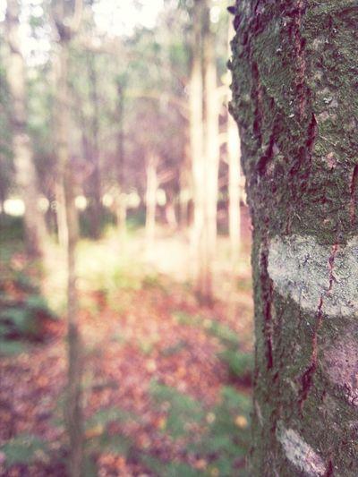 Nature Tag Mit Der Besten Waldspaziergang ♡