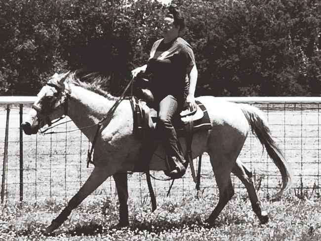 Domestic Domestic Animals Livestock Horse Mammal Pets Animal Field One Person Horseback Riding Working Animal Ride Riding #FREIHEITBERLIN