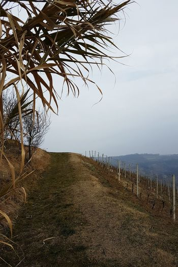 Tree Nature Outdoors No People Scenics Landscape Beauty In Nature Nature Reserve Day Peace And Quiet Calmness Foggy Weather Silence Of Nature Autumn Leaves Autumn Colors Atmospheric Mood Walking In The Hills On The Top Of The Hill Langhe Piedmont EyeEmNewHere
