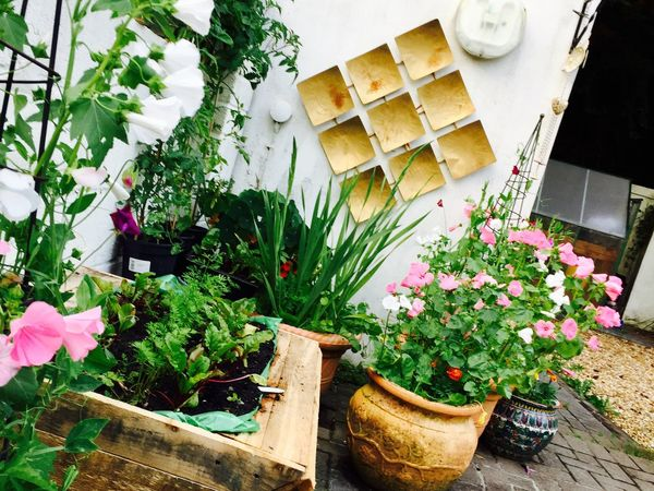 British Summertime Flower Potted Plant Plant Growth Freshness Table Nature High Angle View Outdoors Wood - Material No People Day Fragility Beauty In Nature Window Box Green Fingers Inherited