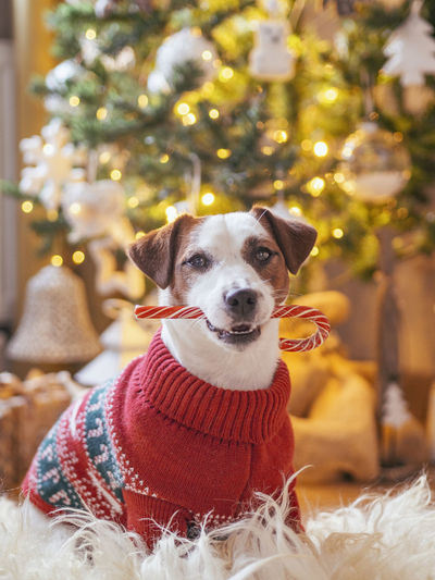 Portrait of dog with christmas tree