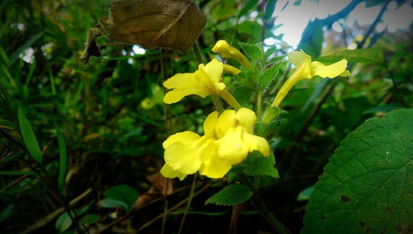 EyeEm Flower Yellow Flower Macro Photography EyeEm Nature Lover Close Shot Htc One M8 Photography Randomshot