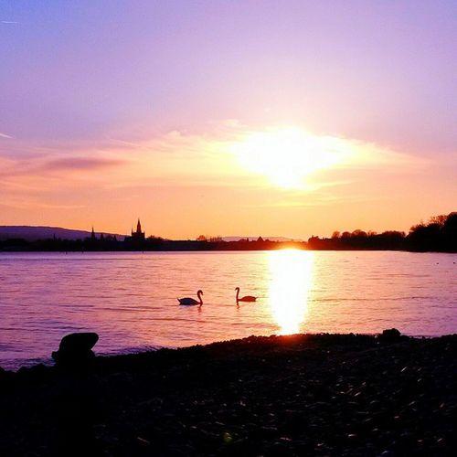 Sunset Konstanz Bodensee Pipik Unserbodensee @petykeaux Wantyoutobehere