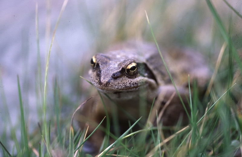 Close-Up Of Toad On Grassy Field