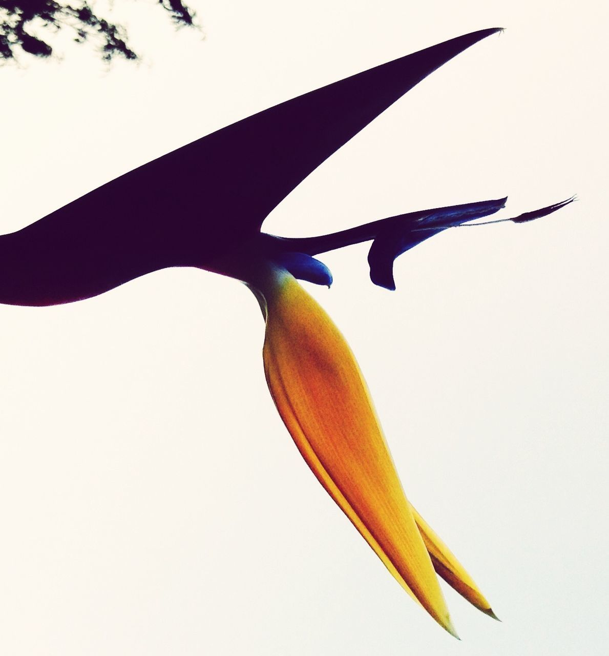Close-Up Of Bird Of Paradise Against Clear Sky