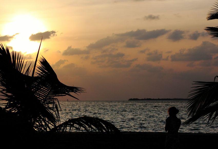 Darkness And Light Sun Sunrise Sea Sea And Sky Clouds Palm Trees Silouette Silouette & Sky