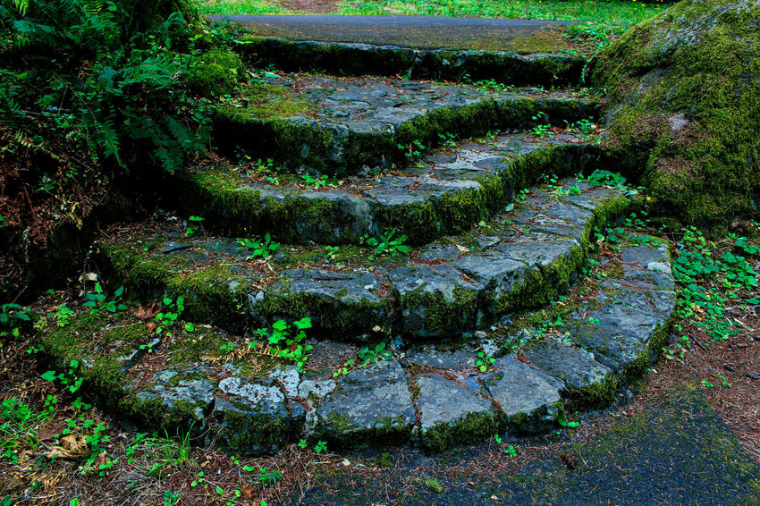 Green Beauty In Nature Moss Nature No People Outdoors Plant Tranquility