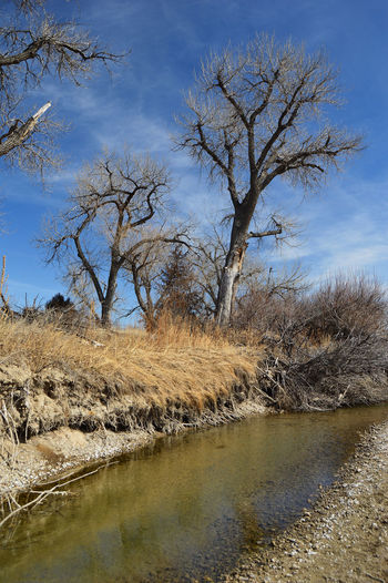 Small pool of water in tributary of the Platte River in Wyoming Nature Bare Trees Blue Day Outdoors River Bank  South Of Lingle Wyoming Water