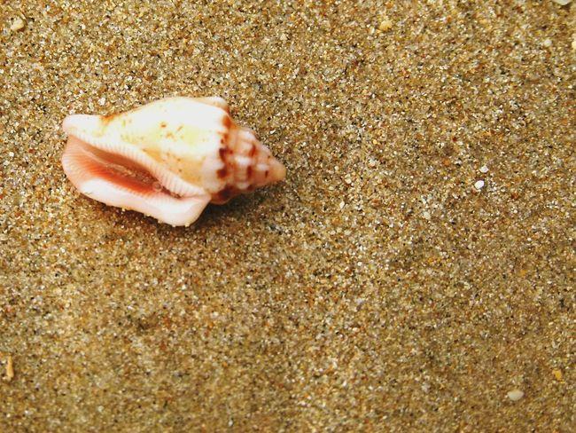 Sea shellsss On The Beach