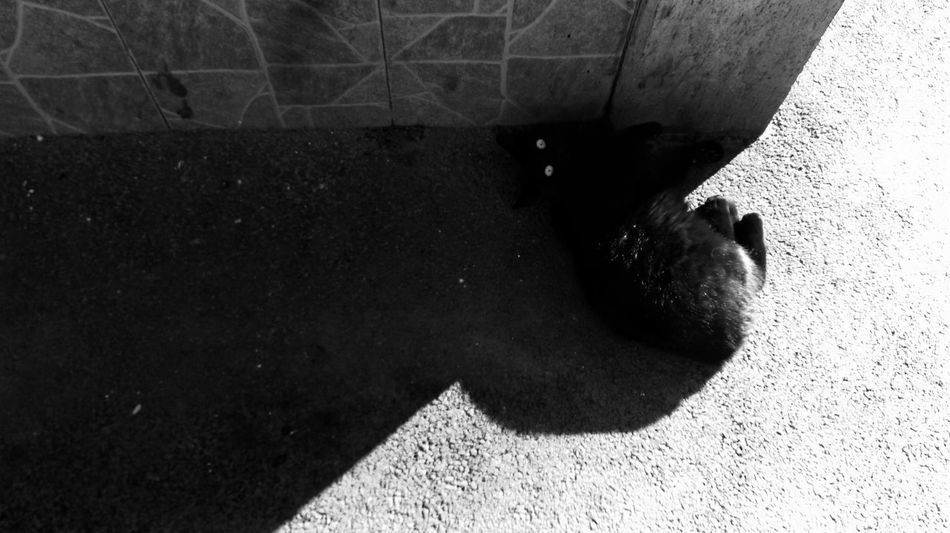 Showcase: February Black And White Photography BLackCat Perspectives Light And Shadow Optimism Pessimism Getting Creative Minimalism Modernism Cat♡ Conceptual Superstition  Inspiring Picture Check This Out