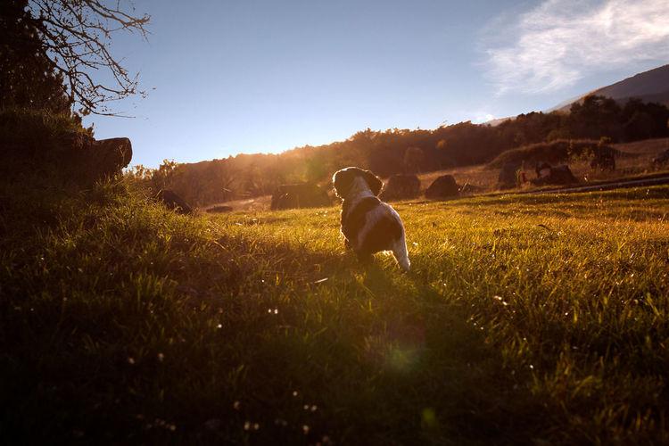 Dog standing in field