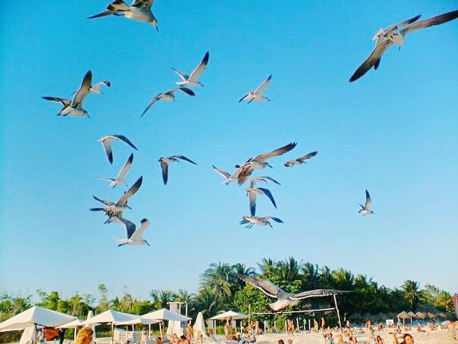 Flying Freedom Taking Photos Mexico Playadelcarmen Bird Animal Themes Animals In The Wild Low Angle View Large Group Of Animals Animal Wildlife Sky Day Spread Wings Built Structure Outdoors Nature Building Exterior Flock Of Birds Mid-air Tree No People Architecture Motion Gaviota