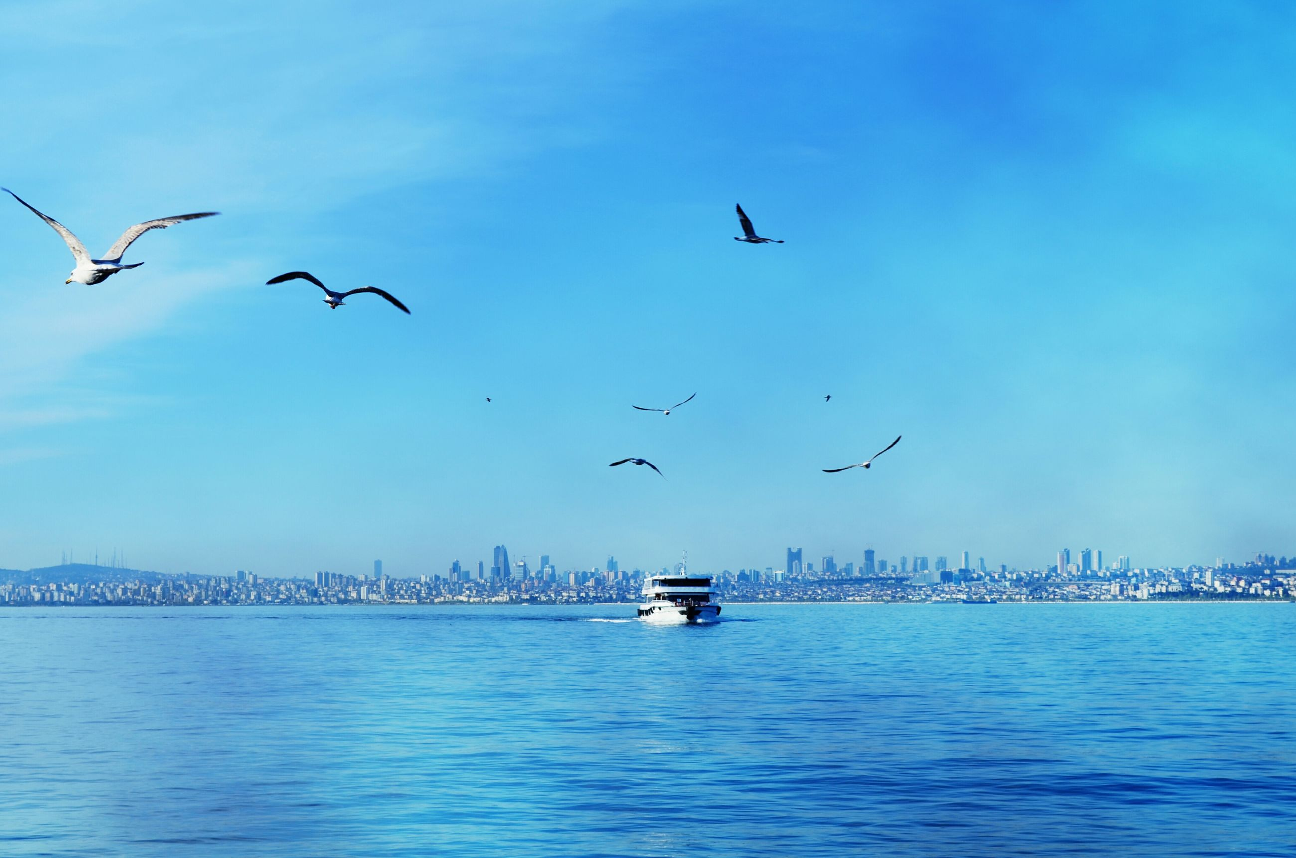 bird, flying, animal themes, animals in the wild, water, wildlife, sea, waterfront, transportation, mid-air, blue, spread wings, sky, seagull, clear sky, building exterior, mode of transport, built structure, architecture