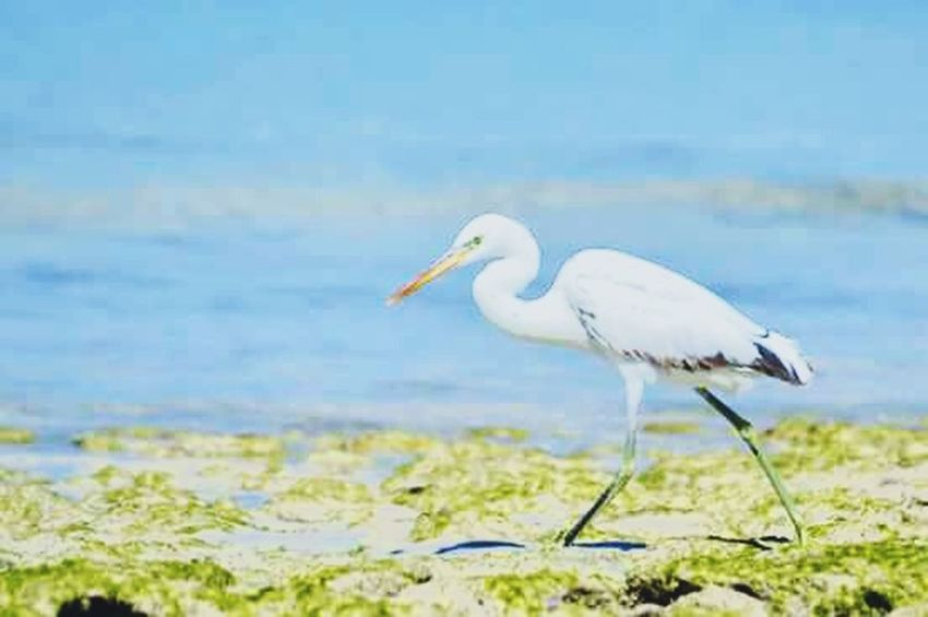 Nature Beautiful ♥ Beauty Sauvage Life Africa Sea Natural Animals Birds Bad Quality