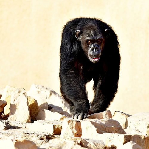 Black dog sitting on rock