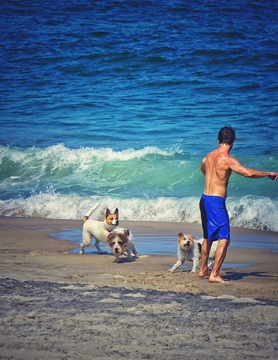 Puppyland Playtime Beach Beachphotography Dog A Dog's Life Enjoying Life Capturing Freedom Leave It All Behind Atlantic Ocean Summer Dogs