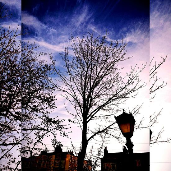 Urban back street ❗ Adapted To The City Brick Houses Chimneys &beautiful Skys  Winter Trees Hint Of Pink Wispyclouds City And Nature Together Lampost, Almost Sundown Outdoors Cloud - Sky Architecture EyeEm New Here Nature In The City Urban Views Bristol Uk