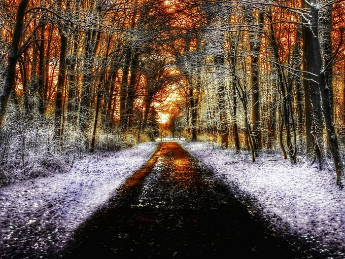 Panasonic Lumix GERMANY🇩🇪DEUTSCHERLAND@ Colorexplosion Snow On The Ground Snow On Trees Colorful Snow Way Trees Going For A Walk Wood Heavy Edits Winter Germany Park Forest Hometown Burning Sky Darkness And Light Goldensky Cityforest Wilhelmshaven Nature Treeandsky HDR
