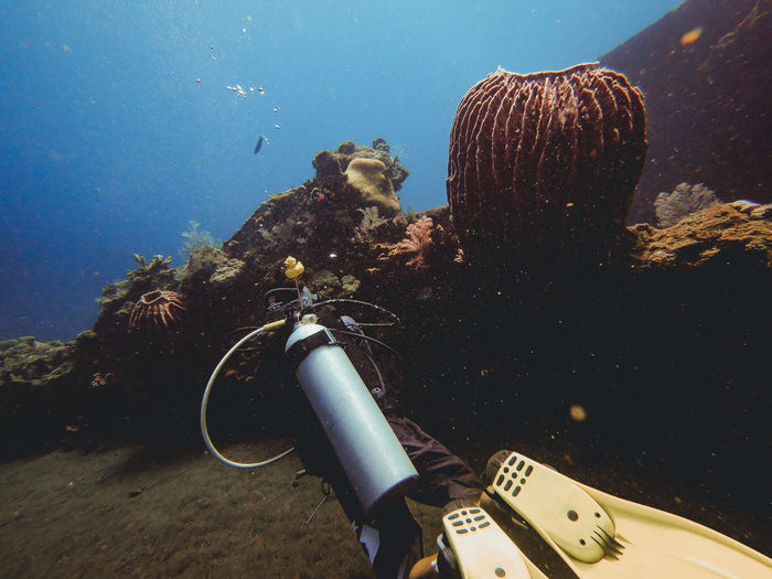 Diving Scuba Diving Animal Animal Themes Animal Wildlife Animals In The Wild Aqualung - Diving Equipment Aquatic Sport Diver Diving Equipment Divingphotography Marine Nature One Animal Scuba Diving Sea Sea Life Sport Swimming UnderSea Underwater Underwater Diving Water