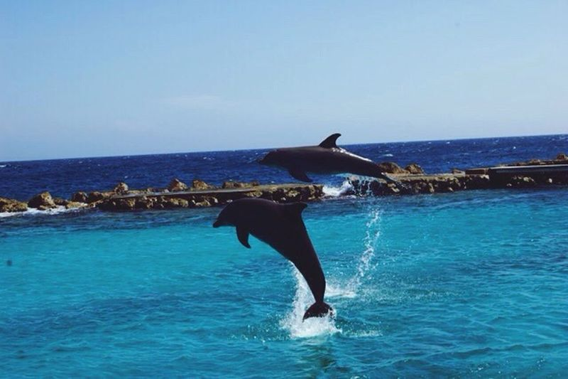 The lovely dolphins in Curacao to 🐬