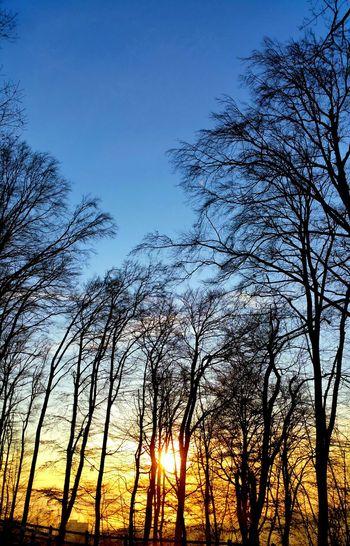 Couleur hivernale!🎅 Hiver Noel2015 Relaxing Hello World Suisse  Lausanne Photographie  Samsung Galaxy Note 4 Eyemphotography Vue Paysage Bleu Nature Forest Coucher De Soleil