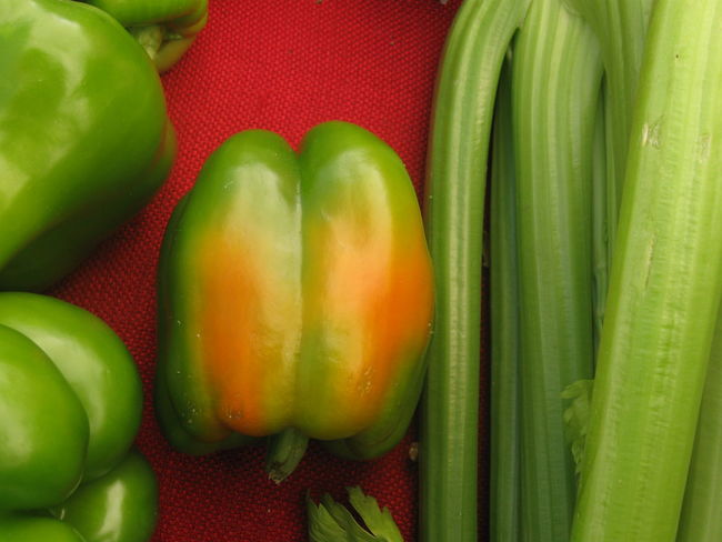 green bellpepper with a tinge of orange at farmers marketin San Jose, California with celery Bell Peppers BYOPaper! Celery Close-up Cookbook Cuisine Art Day Farmers Markets Food Food And Drink Freshness Green Color Healthy Eating Indoors  Live For The Story No People Organic Food Recipe Red Ripening Ripening Fruit Simple Beauty Southwest USA Vegetable Visual Feast