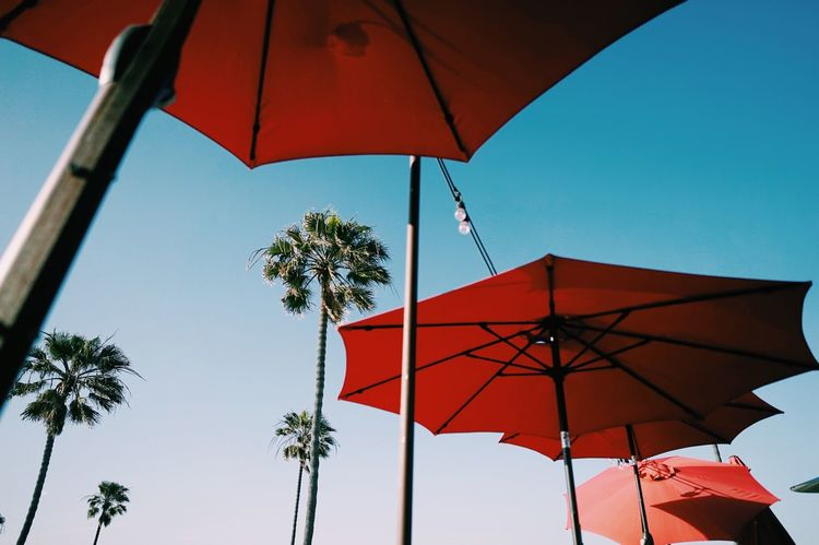 California // Red Low Angle View Hanging Clear Sky No People Tree Sky Palm Tree Outdoors Day