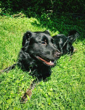 Dog Cute Outdoors Summer