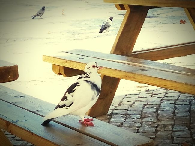 The city and the pidgeon! Urban Lifestyle Lisbon - Portugal Beauty In Nature