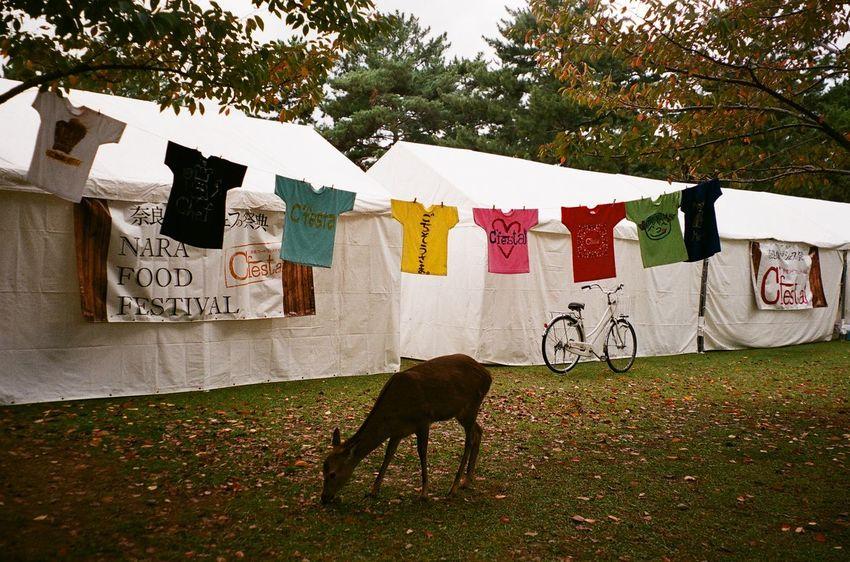 Solitaire - Nara perfecture. Japan. Deer Food Festival Travel Destinations EyeEmNewHere Olympus Mju The Traveler - 2018 EyeEm Awards Analog Photography Nara,Japan Tree Street Art