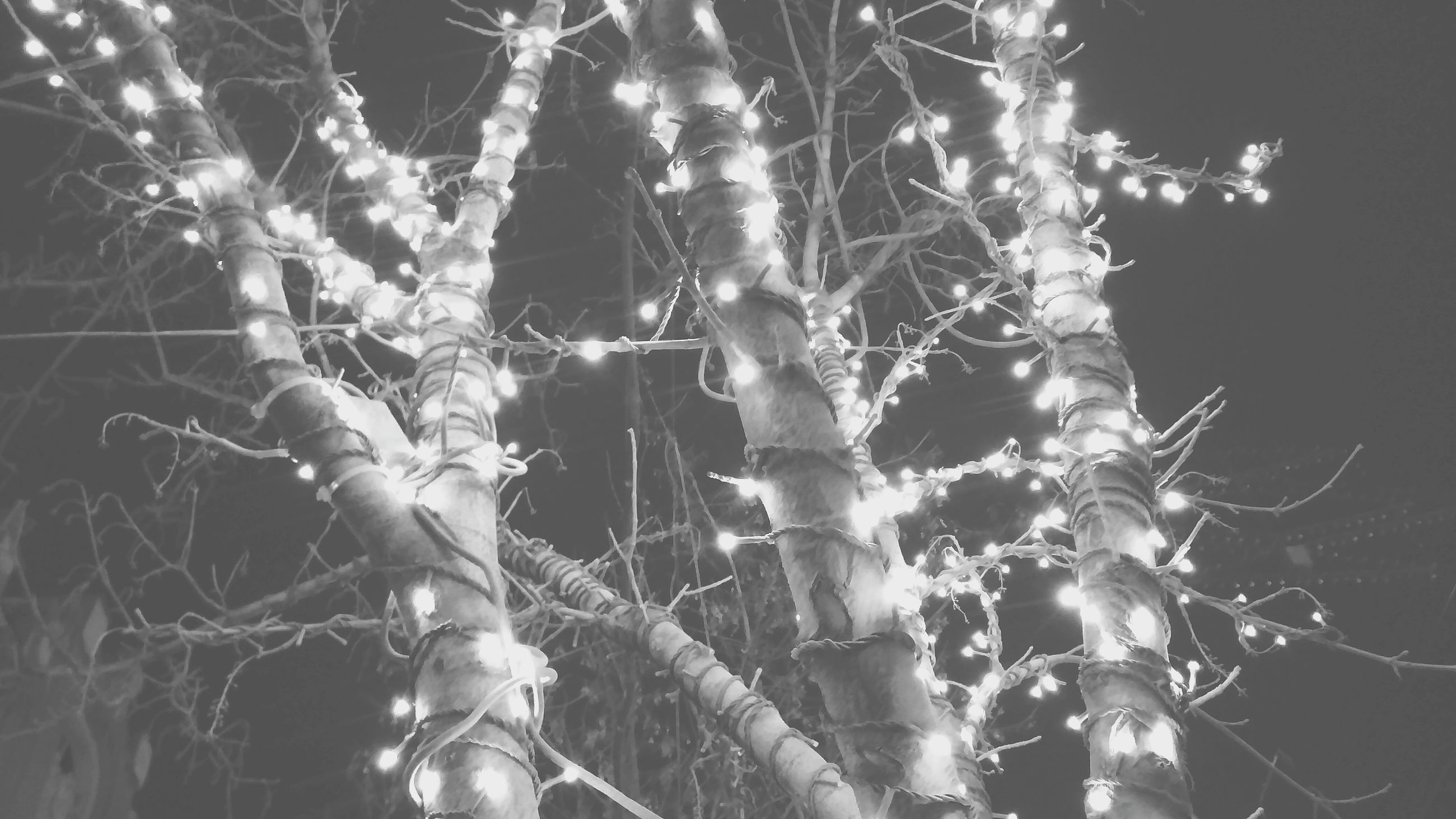 spider web, low angle view, close-up, branch, night, focus on foreground, nature, outdoors, complexity, danger, plant, hanging, spider, no people, stem, growth, fragility, tree, twig