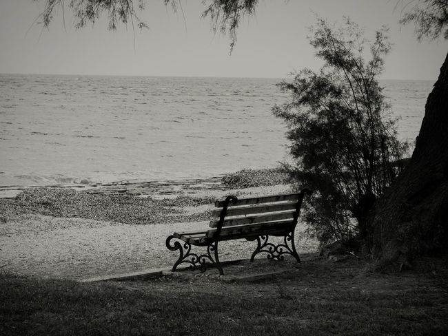 bench Tree Bench Sea Beach Relaxation Water Silhouette Horizon Over Water Nature Beauty In Nature