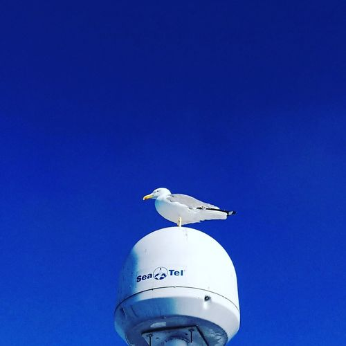 Bird Sky Day One Animal Blue No People Clear Sky Travel Blue Sky Let's Go. Together.
