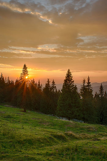Pasul Prislop Beauty In Nature Cloud - Sky Field Grass Grassy Growth Idyllic Landscape Nature Non-urban Scene Orange Color Scenics Silhouette Sky Sun Sunlight Sunset Tranquil Scene Tranquility Tree